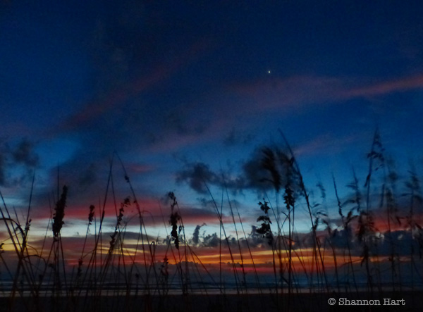New Smyrna Beach sunrise between the seagrass
