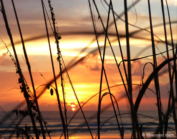 New Smyrna Beach sunrise between seagrass